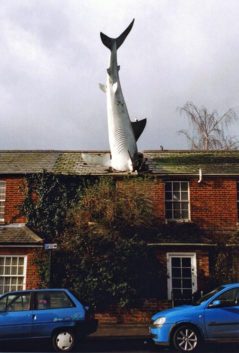 Хайне оно, конечно, виднее, однако связь акулы с Чернобылем и Нагасаки вышла какая-то уж очень неявная. Может, потому что в этих катастрофах акулы не участвовали? (фото с сайта wikimedia.org).